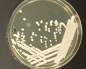 Mikrobiologiska tester